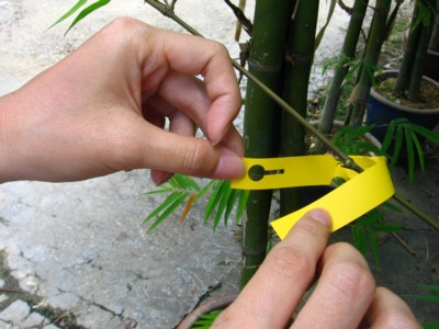 loop lock tree labels wellgrow horti trading