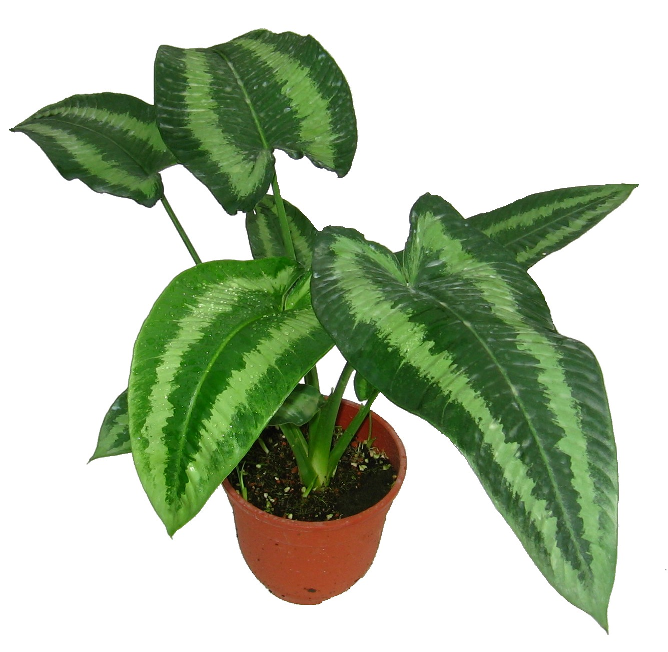 plants for sale indoor plant list ag01 rm9 cl02 rm11 pictures
